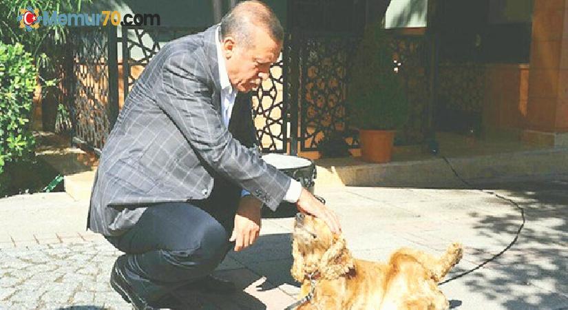Erdoğan'dan hayvan hakları talimatı:  Meclis kapanmadan yasayı çıkarın