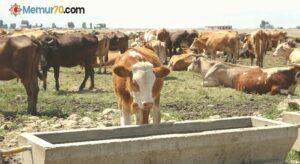 Tarım ve hayvancılığa sağlanan destekle hayvanlarda hastalığa rastlanmıyor