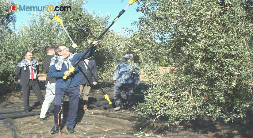 Merhum iş adamının anısına zeytin hasadı yapıldı