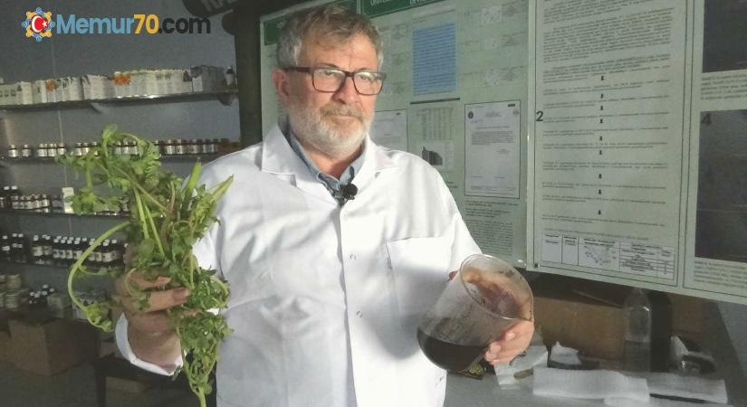 (Özel) Semizotu tohumundan bitkisel omega 3 ilaç etken maddesi üretiyorlar